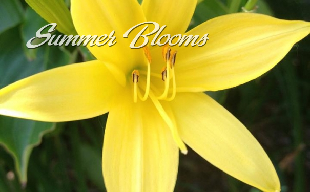SummerBlooms
